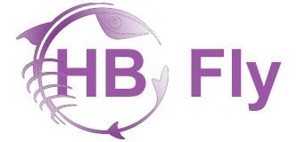 HBfly